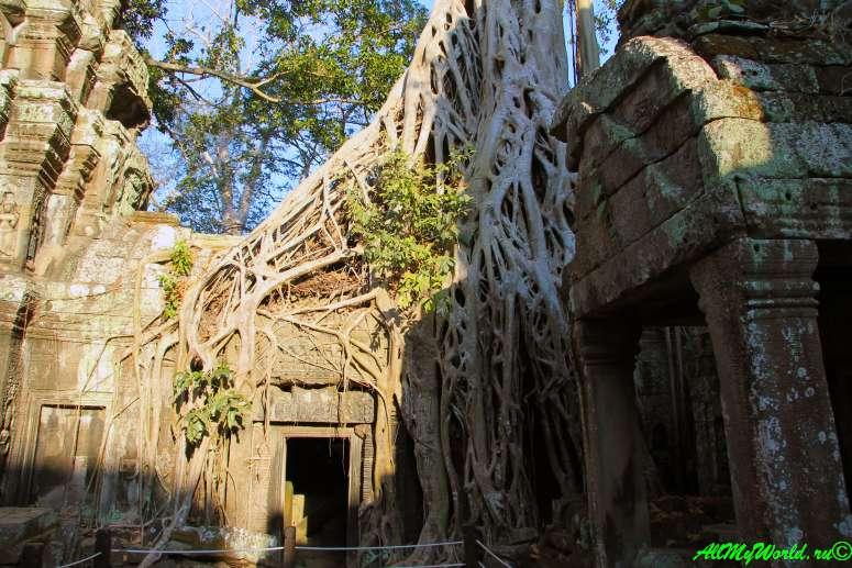 Археологическая зона Ангкор храм Та-Пром (Ta-Prohm) фото