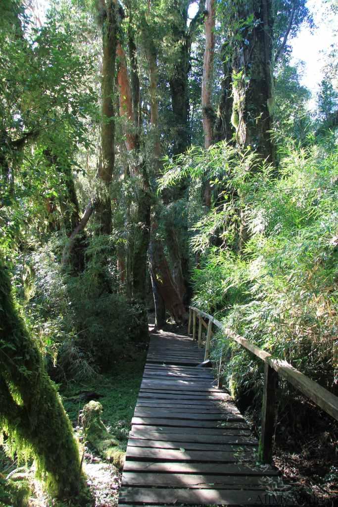 Чили парк Пуеуэ Puyehue