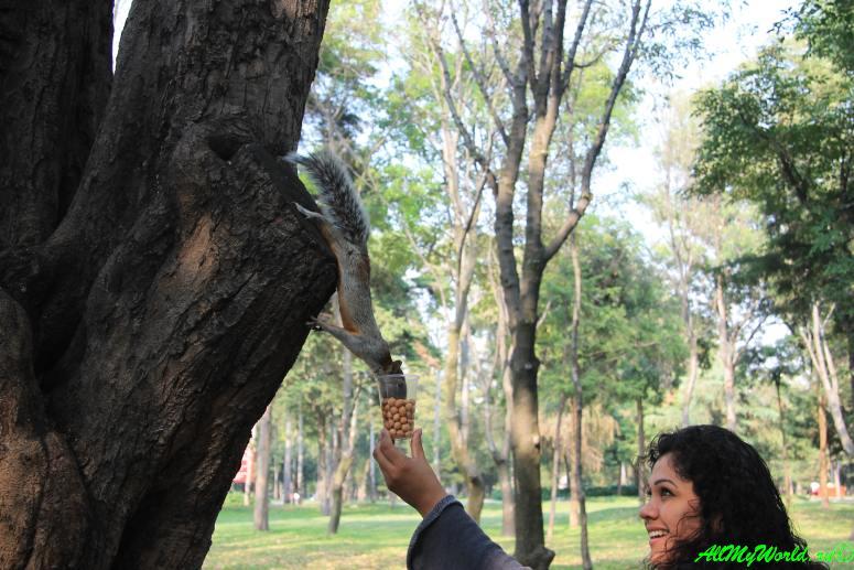 город мехико что посмотреть парк Чапультепек фото