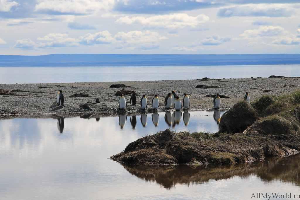 Чили парк пингвинов фото