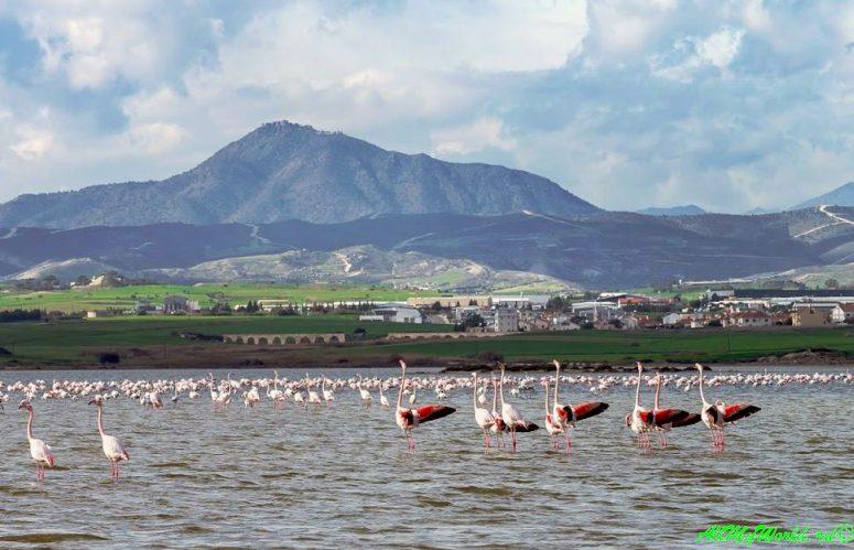 Кипр Ларнака достопримечательности Соленое озеро