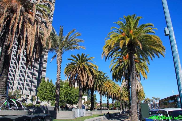 США, город Сан-Франциско - достопримечательности и фото