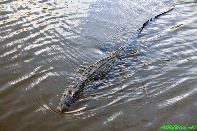 США, город Новый Орлеан - болота Луизианы фото
