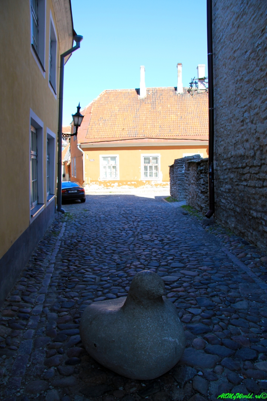 tallin-estoniya-foto-obshhaya-informaciya-o-gorode1