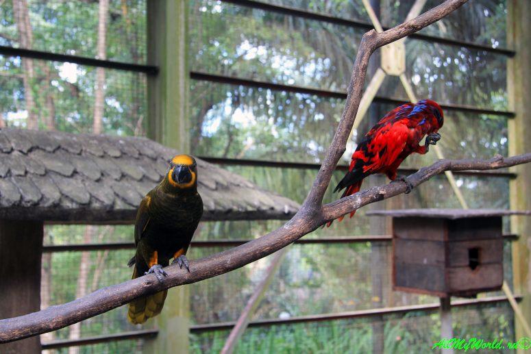 Малайзия: достопримечательности Куала-Лумпура Парк птиц