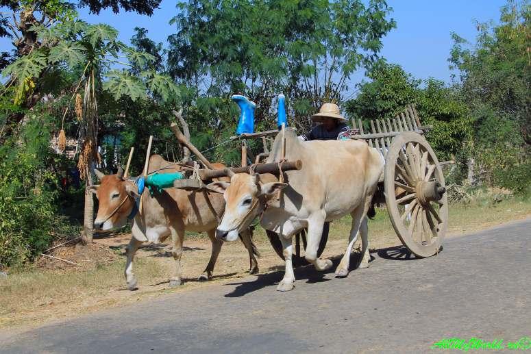 Мьянма город Пьи (Pyay), Шри Ксетра (Sri Ksetra)
