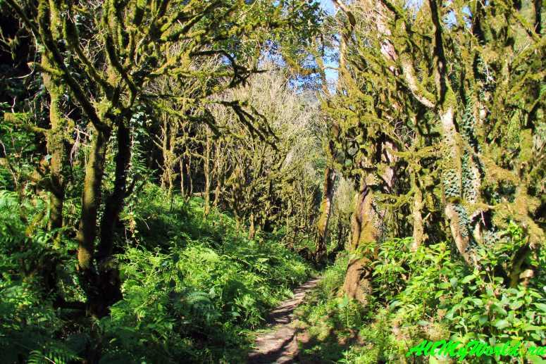 Грузия, Аджария: национальный парк Мачахела - самшитовый лес