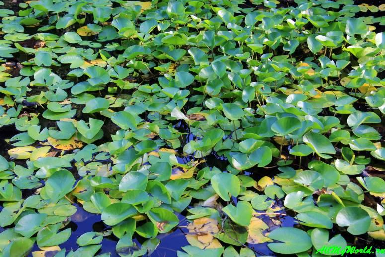 Ботанический сад Тбилиси – зеленый рай в центре города