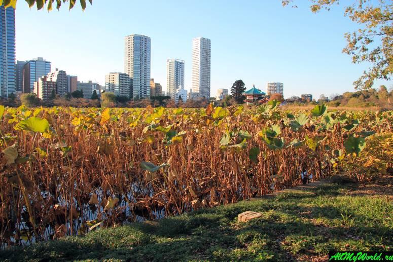 Достопримечательности Токио: пруд Синобадзу в парке Уэно
