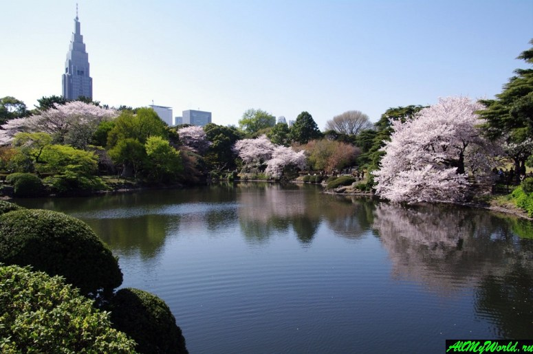 Достопримечательности Токио: парк Синдзюку Гёэн