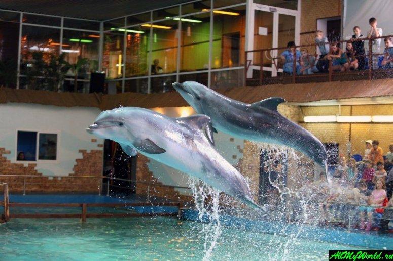 Достопримечательности Ярославля: дельфинарий Dolphin Planet