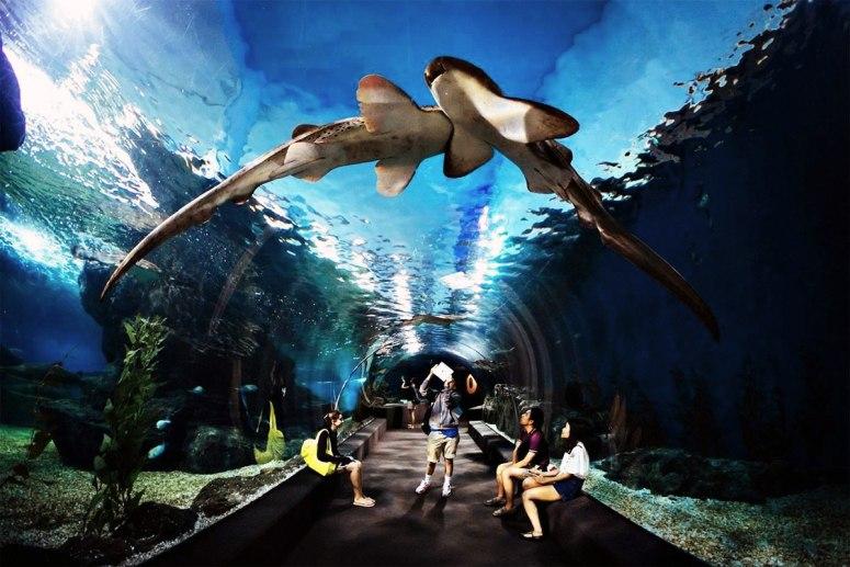 Достопримечательности Бангкока -Океанариум Siam Ocean World