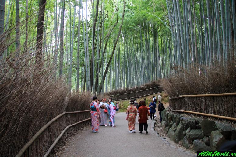 Достопримечательности Киото - Бамбуковый лес
