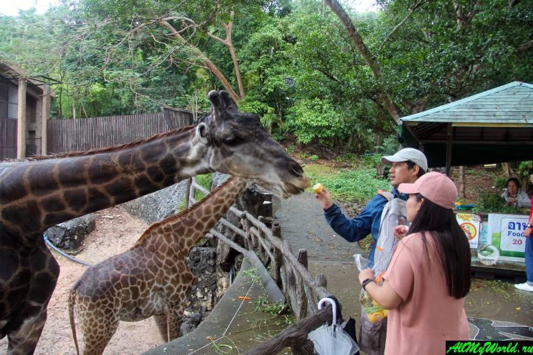 Достопримечательности Паттайи - Зоопарк Кхао Кхео (Khao Kheo Open Zoo)