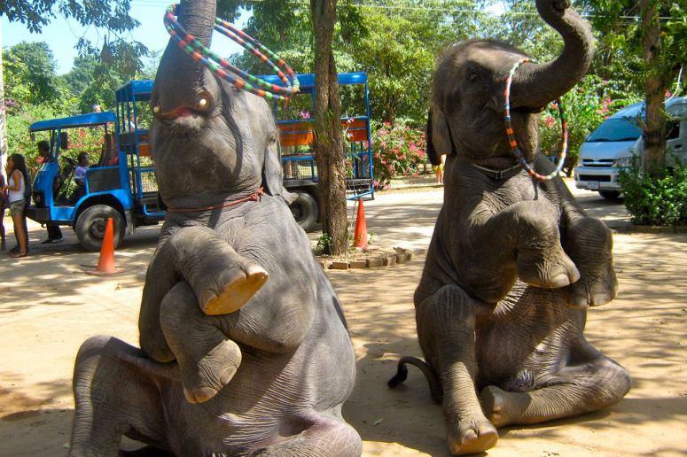 Достопримечательности Паттайи - Деревня слонов