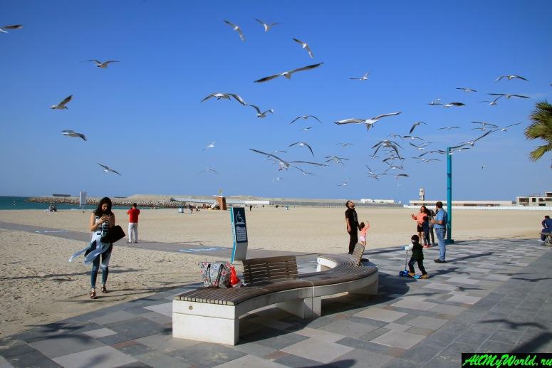 Лучшие бесплатные пляжи Дубая - Пляж Умм-Сукейм 2 (Umm Suqeim 2 Beach)