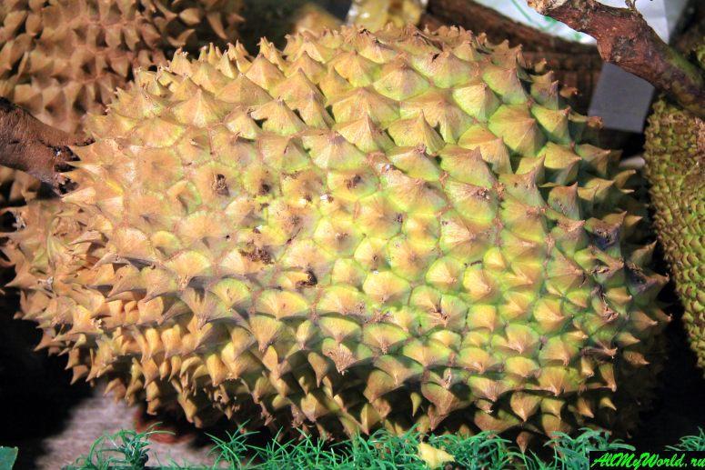 Тайские фрукты - Дуриан