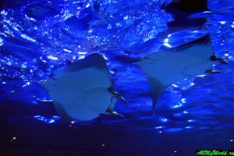 Дубай достопримечательности: аквариум в Дубай Молле