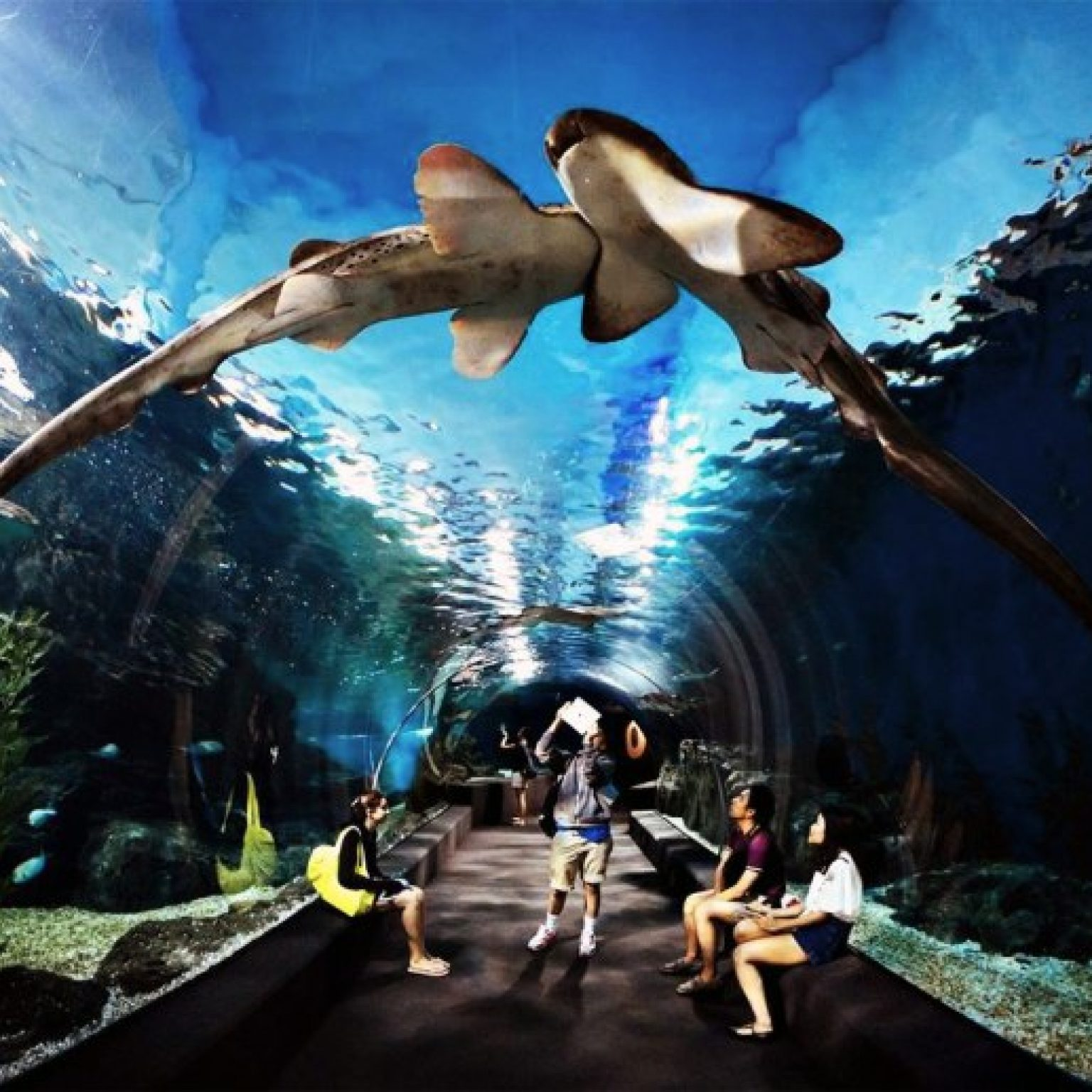 Attractions in Bangkok: Siam Ocean World Aquarium