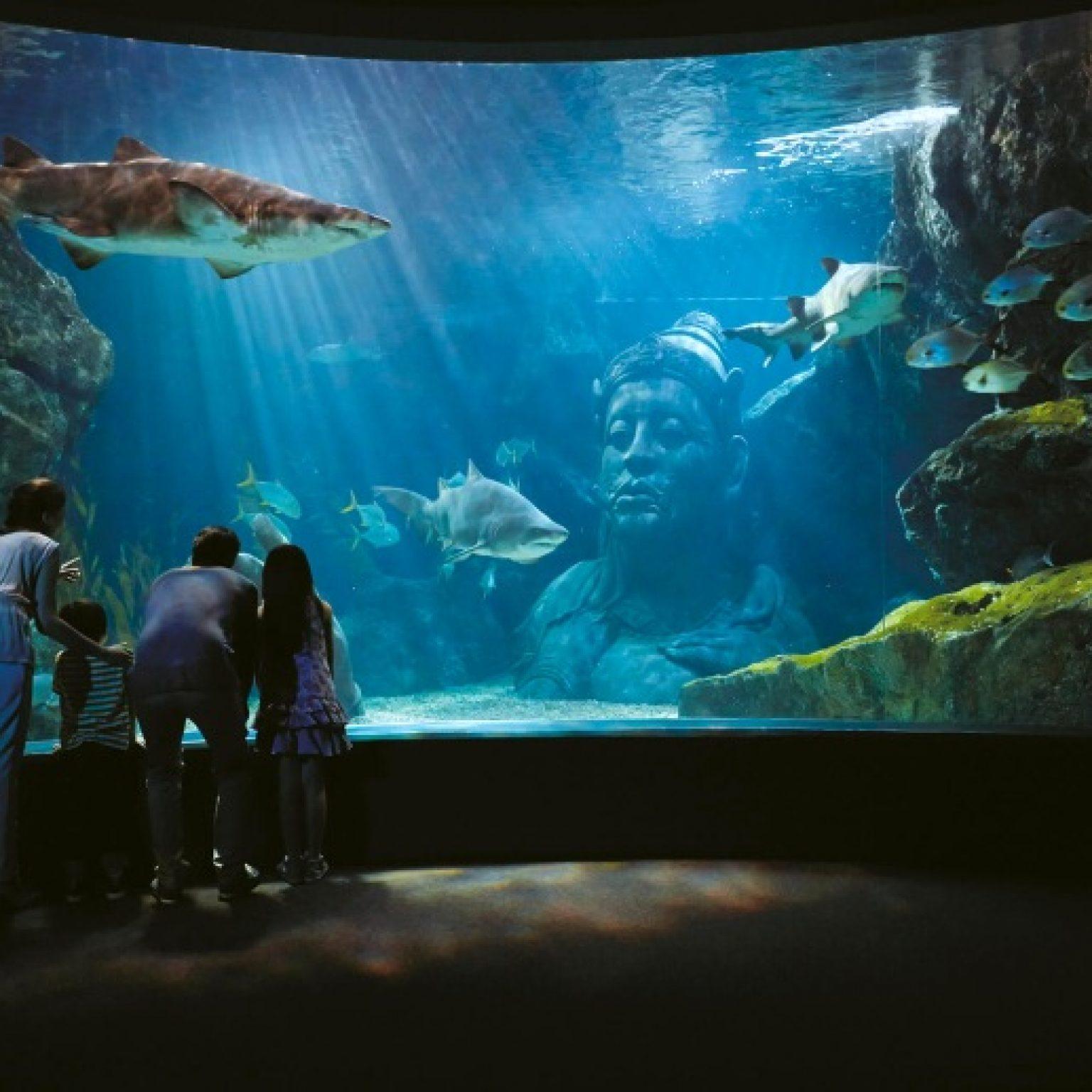 Attractions in Bangkok: Siam Ocean World Aquarium