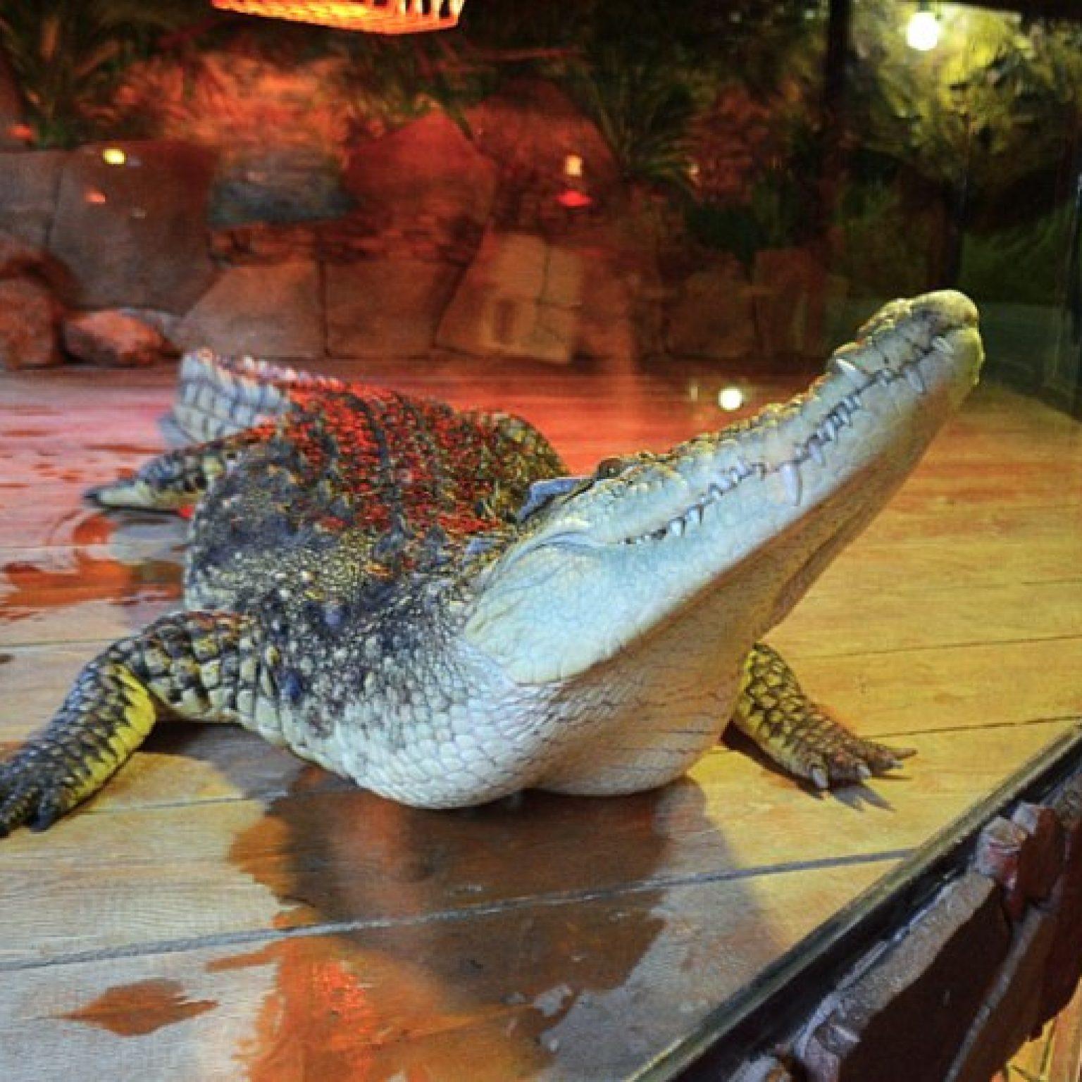 Достопримечательности Евпатории: Крокодиловая ферма