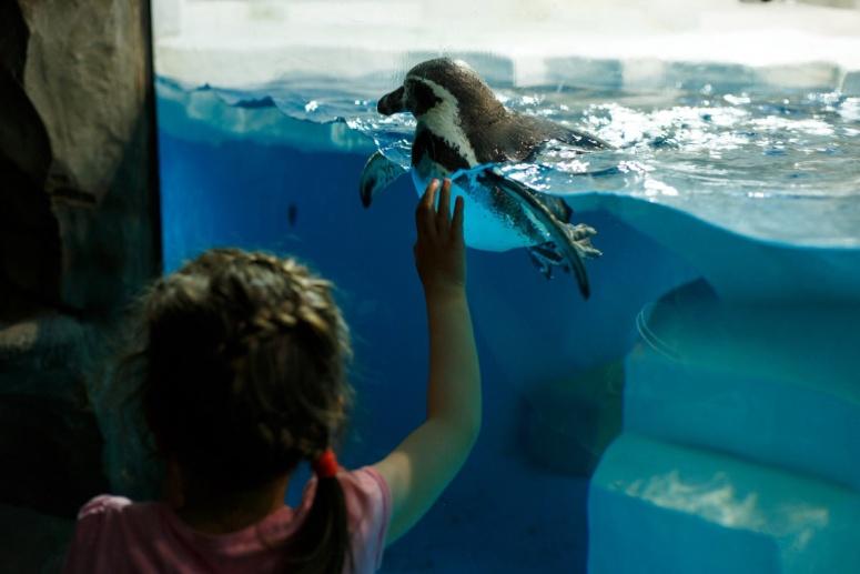 Достопримечательности Самары: Самарский океанариум
