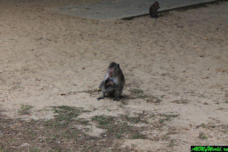 Военный пляж в Паттайе (Голубая лагуна, пляж Сай Кео)