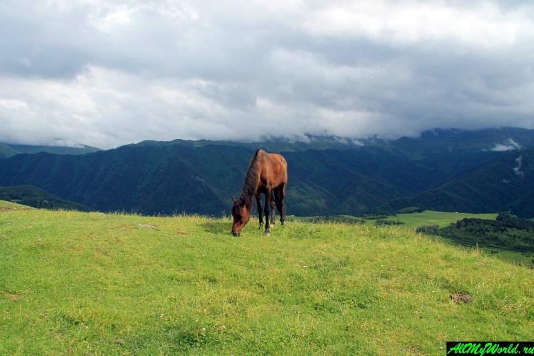 Достопримечательности Абхазии: Псху-Гумистинский заповедник и село Псху