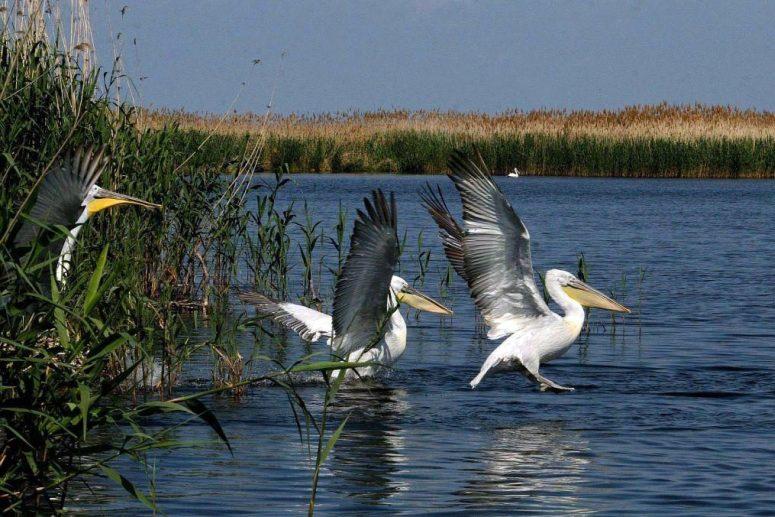 Достопримечательности Поволжья: Астраханский государственный природный заповедник