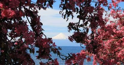 «Озерный край» Чили: Фрутийар и Темуко