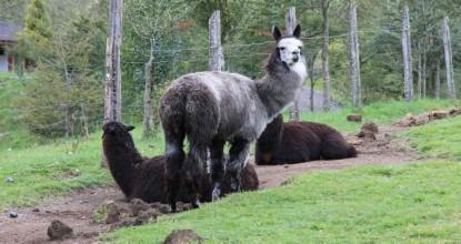 Чили: Национальный парк Уэркеуэ (Parque Nacional Huerquehue)