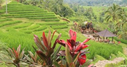 Рассказ про Бали: рисовые поля Джатилувиха и город Убуд